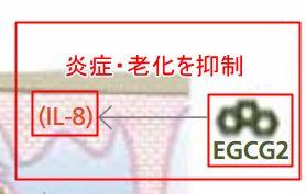 EGCG2