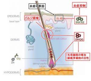 DHQG・EGCG2-01