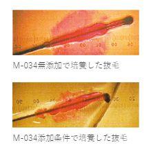 M-034・培養・データ