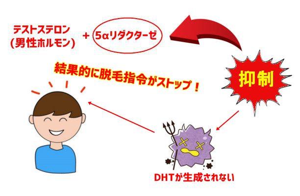 5αリダクターゼ組織図