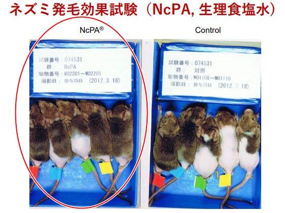 NcPA・マウス