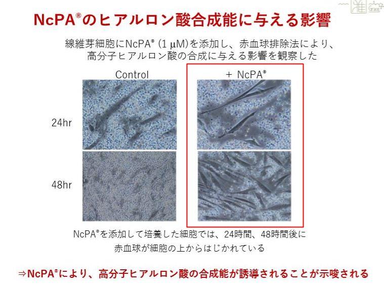 NcPA・ヒアルロン酸01