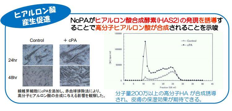 NcPA・ヒアルロン酸