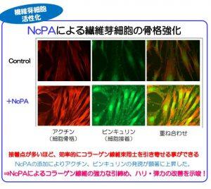 NcPA・コラーゲン01