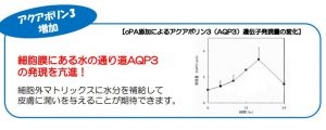 NcPA・アクアポリン3